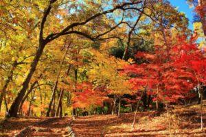 360度真っ赤な紅葉 長瀞「月の石もみじ公園」と金運上昇 銭神様 聖神社